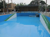 1030513~今夏第一游之 Good dog妙狗寵物游泳池:1030513-03-Good dog妙狗寵物游泳池007.JPG