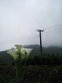 970411~竹子湖海芋花海季:970411-01-竹子湖062.JPG