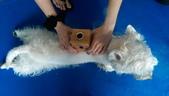 1030513~今夏第一游之 Good dog妙狗寵物游泳池:1030513-03-Good dog妙狗寵物游泳池170.jpg