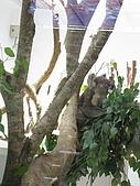 970707~台北市立動物園:970707-台北市立動物園009.JPG