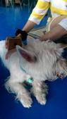 1030513~今夏第一游之 Good dog妙狗寵物游泳池:1030513-03-Good dog妙狗寵物游泳池174.jpg