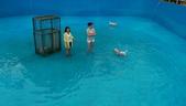 1030513~今夏第一游之 Good dog妙狗寵物游泳池:1030513-03-Good dog妙狗寵物游泳池017.jpg
