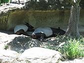 970707~台北市立動物園:970707-台北市立動物園020.JPG