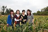 961123~金門. 文化美食購物之旅:961125-13-C-高梁花田016.JPG