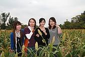 961123~金門. 文化美食購物之旅:961125-13-C-高梁花田018.JPG