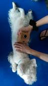 1030513~今夏第一游之 Good dog妙狗寵物游泳池:1030513-03-Good dog妙狗寵物游泳池175.jpg