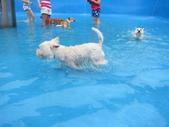 1030513~今夏第一游之 Good dog妙狗寵物游泳池:1030513-03-Good dog妙狗寵物游泳池019.JPG