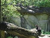 970707~台北市立動物園:970707-台北市立動物園022.JPG
