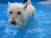 1030513~今夏第一游之 Good dog妙狗寵物游泳池:1030513-03-Good dog妙狗寵物游泳池021.JPG