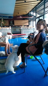 1030513~今夏第一游之 Good dog妙狗寵物游泳池:1030513-03-Good dog妙狗寵物游泳池181.jpg