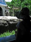 970707~台北市立動物園:970707-台北市立動物園026.JPG