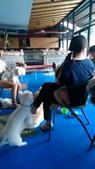 1030513~今夏第一游之 Good dog妙狗寵物游泳池:1030513-03-Good dog妙狗寵物游泳池182.jpg