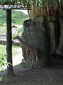 970707~台北市立動物園:970707-台北市立動物園029.JPG