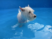 1030513~今夏第一游之 Good dog妙狗寵物游泳池:1030513-03-Good dog妙狗寵物游泳池025.JPG