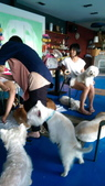 1030513~今夏第一游之 Good dog妙狗寵物游泳池:1030513-03-Good dog妙狗寵物游泳池183.jpg