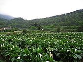 970411~竹子湖海芋花海季:970411-01-竹子湖004.JPG