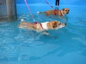 1030513~今夏第一游之 Good dog妙狗寵物游泳池:1030513-03-Good dog妙狗寵物游泳池027.JPG