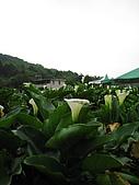 970411~竹子湖海芋花海季:970411-01-竹子湖007.JPG