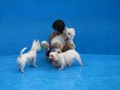 1030513~今夏第一游之 Good dog妙狗寵物游泳池:1030513-03-Good dog妙狗寵物游泳池029.JPG