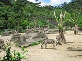 970707~台北市立動物園:970707-台北市立動物園035.JPG