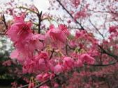 1040211~原來這麼近賞櫻點之 壽山櫻花園:1040211-03-壽山櫻花園034.JPG
