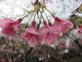 1040211~原來這麼近賞櫻點之 壽山櫻花園:1040211-03-壽山櫻花園046.JPG