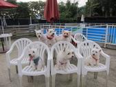 1030513~今夏第一游之 Good dog妙狗寵物游泳池:1030513-03-Good dog妙狗寵物游泳池188.JPG