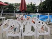 1030513~今夏第一游之 Good dog妙狗寵物游泳池:1030513-03-Good dog妙狗寵物游泳池190.JPG