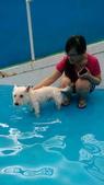 1030513~今夏第一游之 Good dog妙狗寵物游泳池:1030513-03-Good dog妙狗寵物游泳池035.jpg