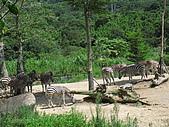 970707~台北市立動物園:970707-台北市立動物園044.JPG
