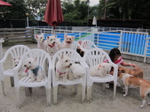 1030513~今夏第一游之 Good dog妙狗寵物游泳池:1030513-03-Good dog妙狗寵物游泳池192.JPG