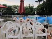 1030513~今夏第一游之 Good dog妙狗寵物游泳池:1030513-03-Good dog妙狗寵物游泳池195.JPG