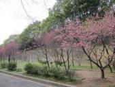 1040211~原來這麼近賞櫻點之 壽山櫻花園:1040211-03-壽山櫻花園001.JPG
