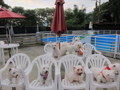 1030513~今夏第一游之 Good dog妙狗寵物游泳池:1030513-03-Good dog妙狗寵物游泳池198.JPG