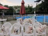 1030513~今夏第一游之 Good dog妙狗寵物游泳池:1030513-03-Good dog妙狗寵物游泳池200.JPG