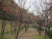 1040211~原來這麼近賞櫻點之 壽山櫻花園:1040211-03-壽山櫻花園002.JPG
