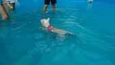 1030513~今夏第一游之 Good dog妙狗寵物游泳池:1030513-03-Good dog妙狗寵物游泳池045.jpg