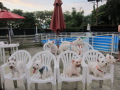 1030513~今夏第一游之 Good dog妙狗寵物游泳池:1030513-03-Good dog妙狗寵物游泳池203.JPG
