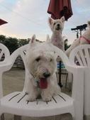 1030513~今夏第一游之 Good dog妙狗寵物游泳池:1030513-03-Good dog妙狗寵物游泳池206.JPG