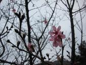 1040218~Happy Chinese New Year :1040219-02-黃金博物館032.JPG