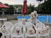 1030513~今夏第一游之 Good dog妙狗寵物游泳池:1030513-03-Good dog妙狗寵物游泳池209.JPG