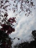1040211~原來這麼近賞櫻點之 壽山櫻花園:1040211-03-壽山櫻花園029.JPG