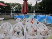 1030513~今夏第一游之 Good dog妙狗寵物游泳池:1030513-03-Good dog妙狗寵物游泳池211.JPG