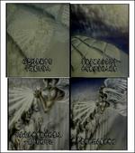聖經圖片:啟示錄7.png