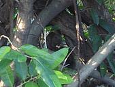 98/1/3植物園~1y3m:IMG_0920.JPG