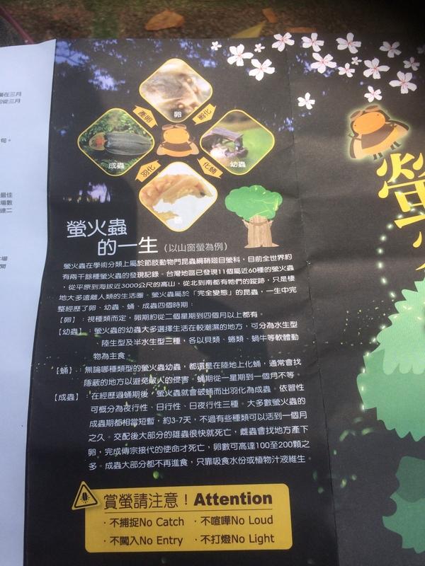 2017.04~06月:2017.04.16東勢林場.炸蝦貓 (8).jpg