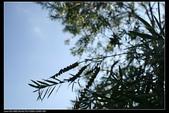 三義勝興車站.龍騰斷橋.鯉魚潭.大峽谷+天空之城:IMG_8669.jpg