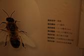 2013.相簿:2013.11.03古坑綠色隧道 (19).jpg