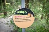2017.04~06月:2017.04.16東勢林場.炸蝦貓 (31).jpg