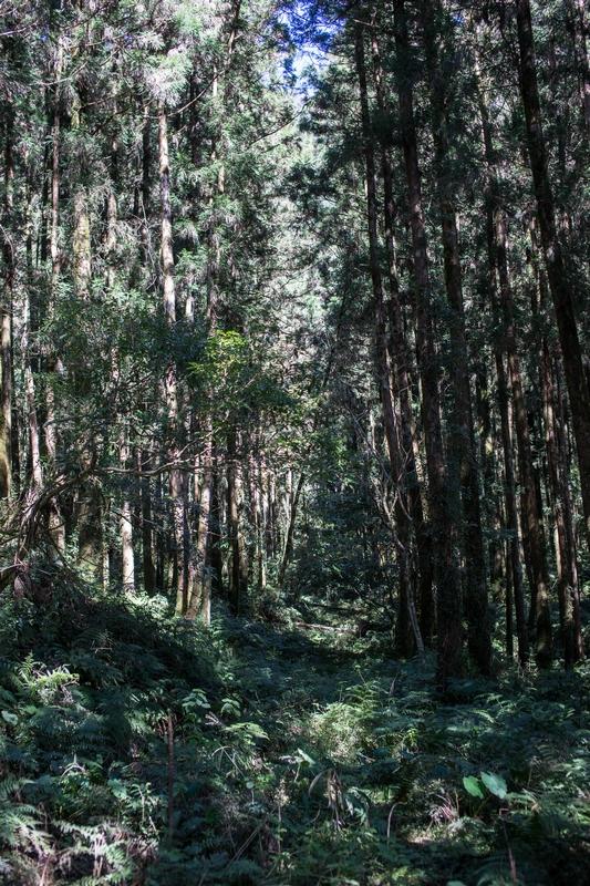 2019.01~03月:2019.02.03明池森林遊樂區 (26).jpg